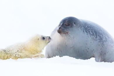 Cura materna