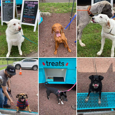 Just a few happy customers! Check out Off the Leash's Facebook page to see more!