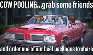 cowpooling.jpg