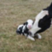 cow&baby.jpg