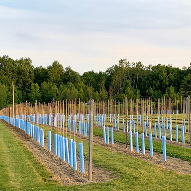 Once planted in our research vineyard, each new grape variety has its opportunity to show what it can do!