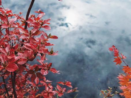 浅間山 asamayama/鬼押出し園 onioshidasien