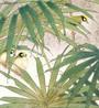 Birdsm6.jpg