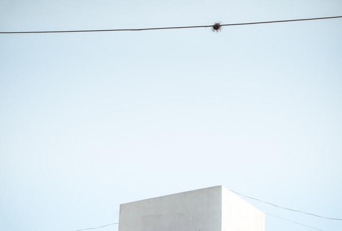 Clavel del aire-1.jpg