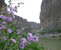 canyon flower.jpg