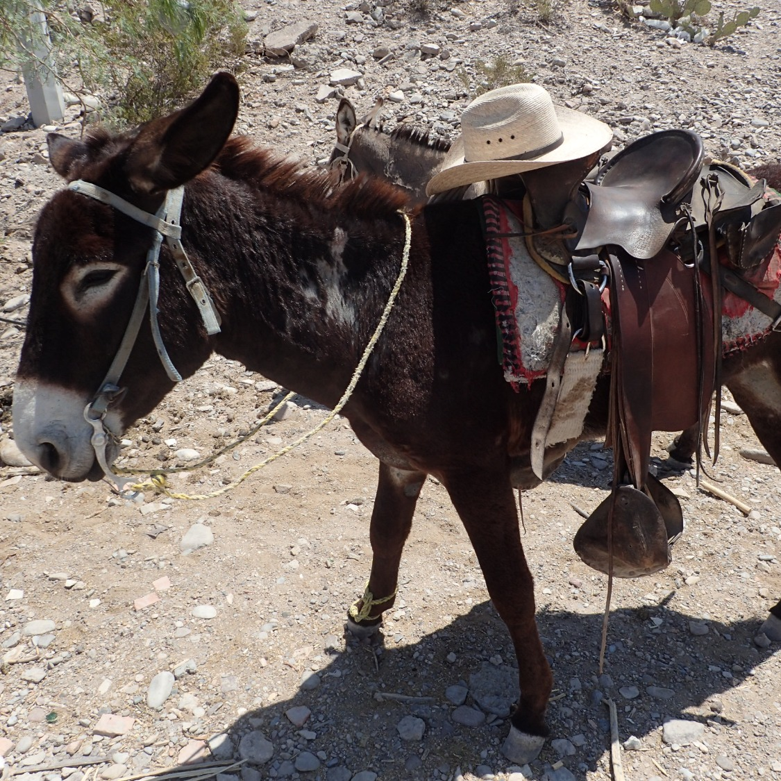 Burro Ride to Town