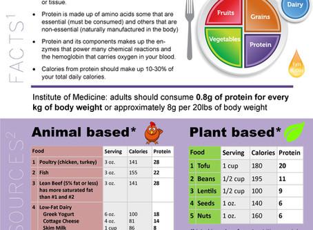 Nutrition Series: PROTEIN