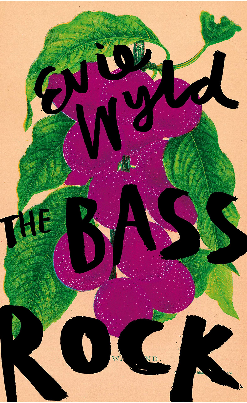 THE BASS ROCK by Evie Wyld : thebookslut book reviews the book slut