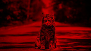 """Sometimes Dead is Better"": Grief and Transformation in Pet Sematary (2019)"