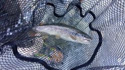 Pêche au toc savoie