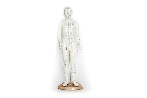 מודל מרידיאנים גבר
