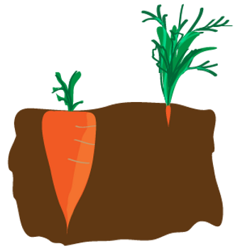 carrot-03.png