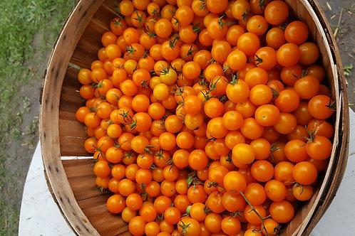 one pint Acid Free Cherry Tomatos