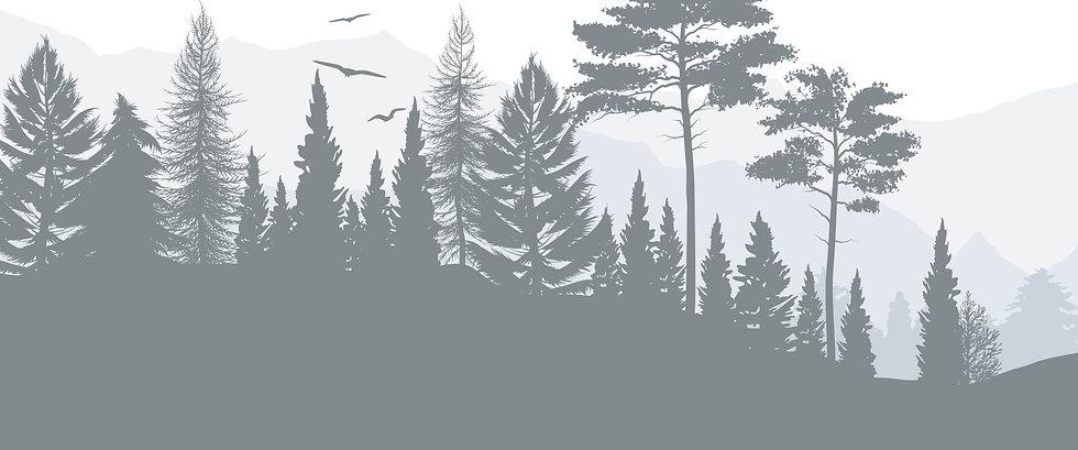 forest 2_Mesa de trabajo 1.jpg