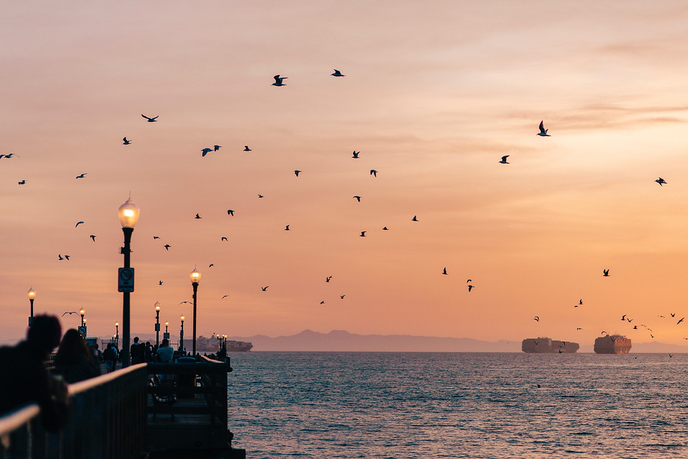 Birds flying at Sunset at Seal Beach Pier in CA