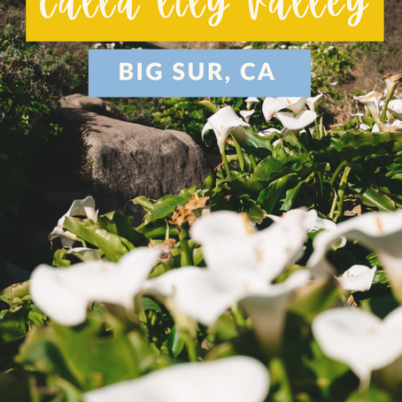 Calla Lily Valley: Bloom Time & Location