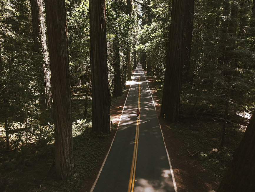 Avenue of Giants road photography