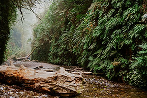 Fern Canyon Humboldt County_brittsbellav