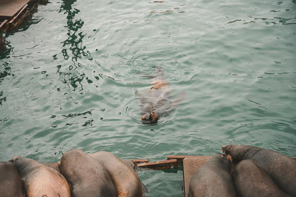 Seal Docks in Newport Oregon