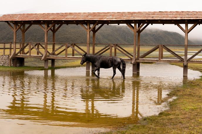 Cotopaxi - Wild Horses