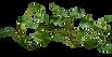 vines-transparent-background-15.png