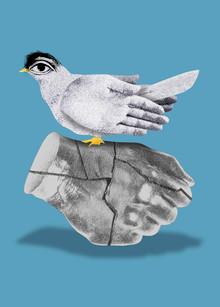 Dove Three