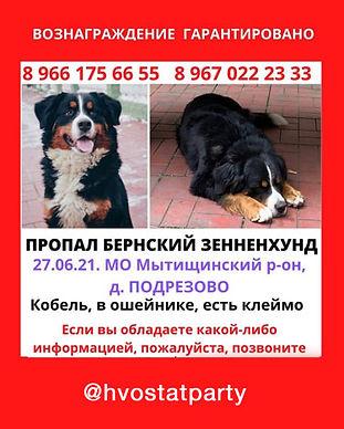 dog-lost.jpg