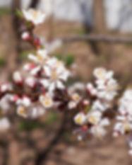berluki-garden-fb.jpg