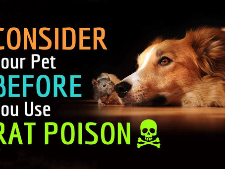 CONSIDER YOUR PET BEFORE YOU USE RAT POISON