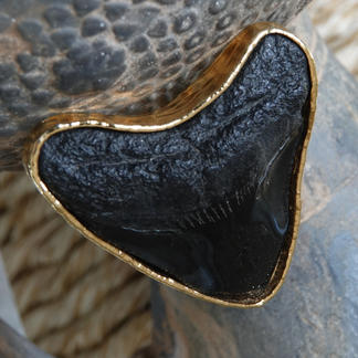 Fosilized shark tooth ring