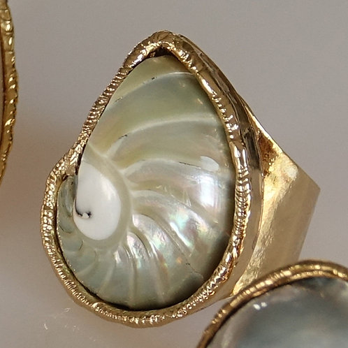 Gold One of a Kind Nautilus Shell Ring