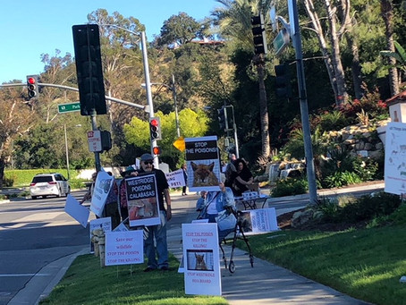 Calabasas Residents PROTEST against HOA using Rat Poisons containing deadly Rodenticide poison