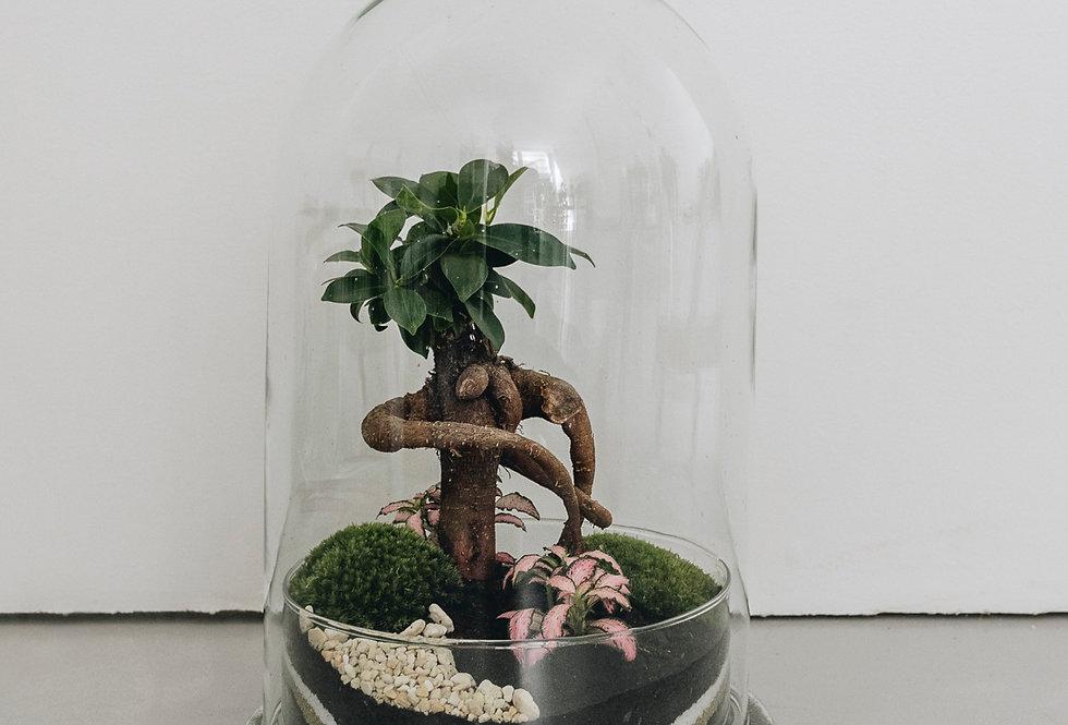 Terrarium Java à Lyon, Rhône Alpes, France. Contenant en verre, ficus microcarpa, fittonia et mousse