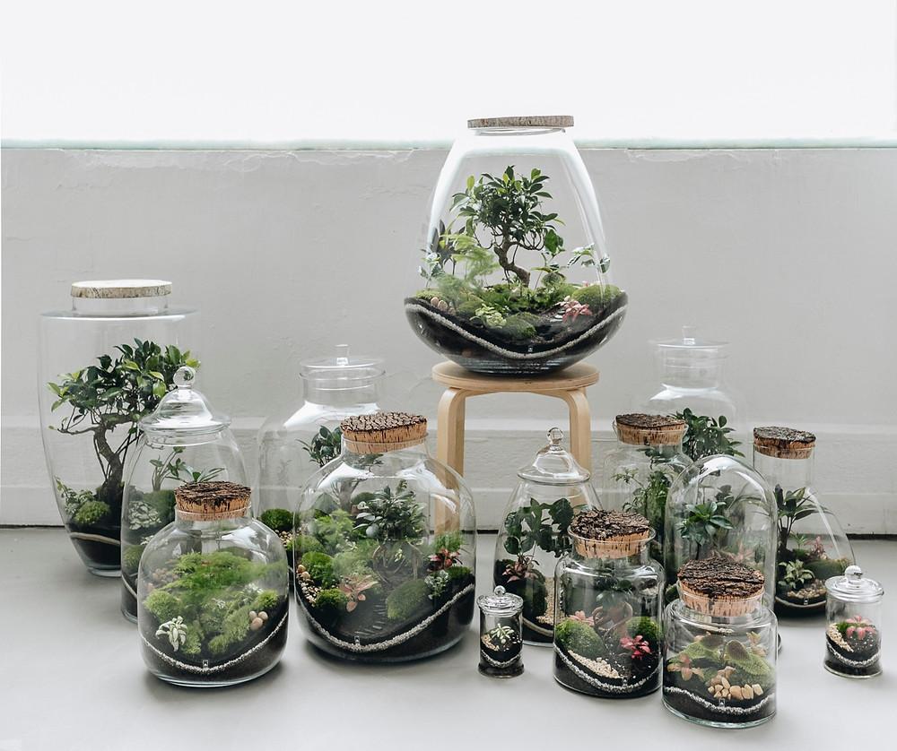 Terrariums Onno : le cadeau de noël pour décorer son intérieur durablement et sans entretien
