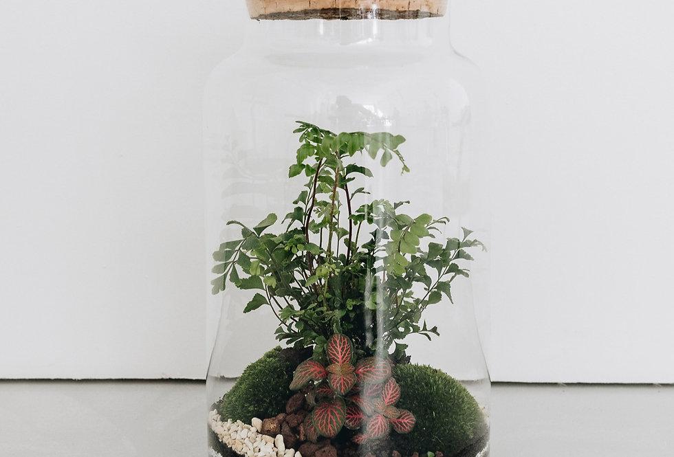 Terrarium Amazonia à Lyon, Rhône Alpes, France. Contenant en verre, bouchon en liège, fougère acajou, fittonia et mousse