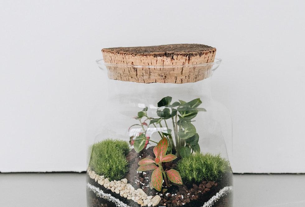 Terrarium San José à Lyon, Rhône Alpes, France. Contenant en verre, bouchon en liège naturel, syngonium, mousse et fittonia