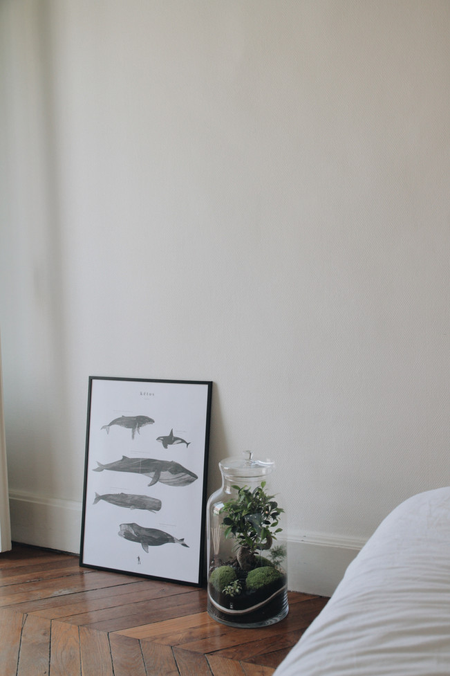 Terrarium Bali dans une chambre, objet de décoration durable et facile d'entretien