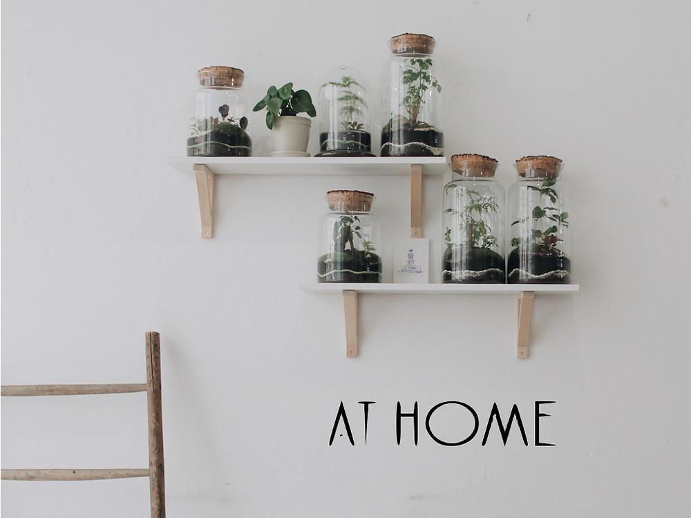 concept store at home roanne loire rhône alpes france terrarium