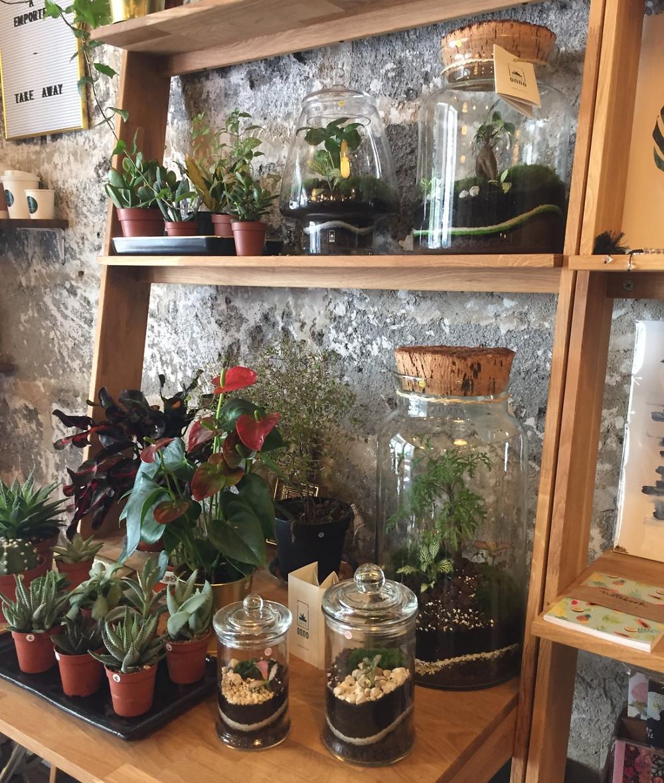 Terrarium Onno installé sur des étagères chez Anahaera café lyon 7
