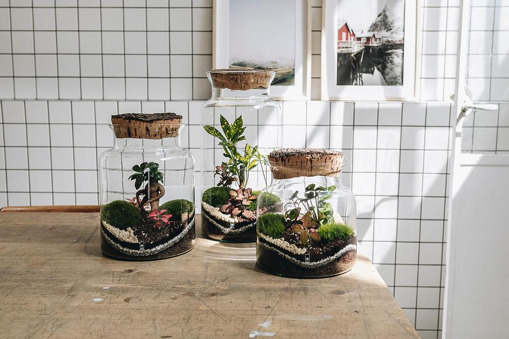 Terrariums Onno au concept store Le Showroom Home & Kids au Luxembourg, Europe