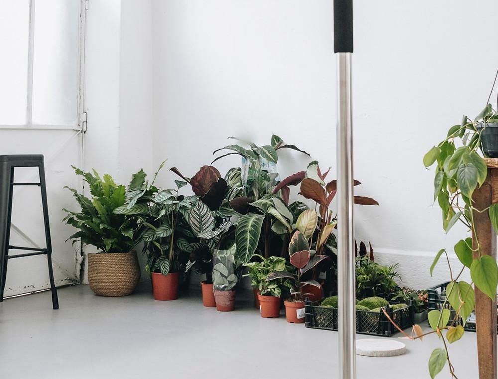 Plantes tropicales à Lyon, Rhône Alpes, France