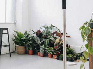 Plantes : lancement des ventes privées