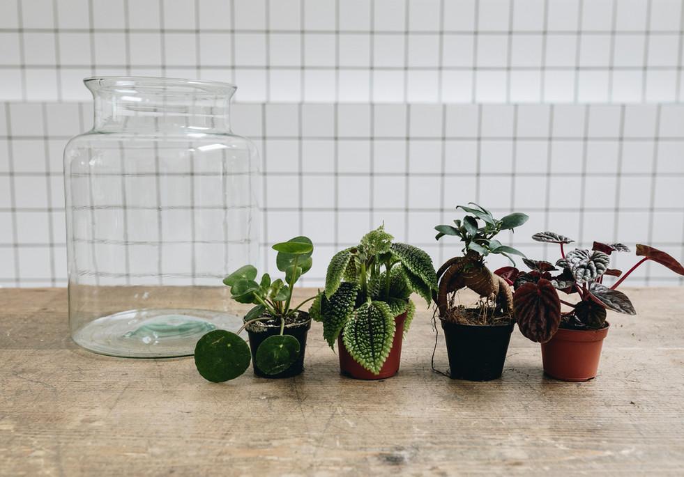 Plantes de l'atelier DIY terrarium pour un format M à Lyon Rhône Alpes France chez Onno jardins intérieurs