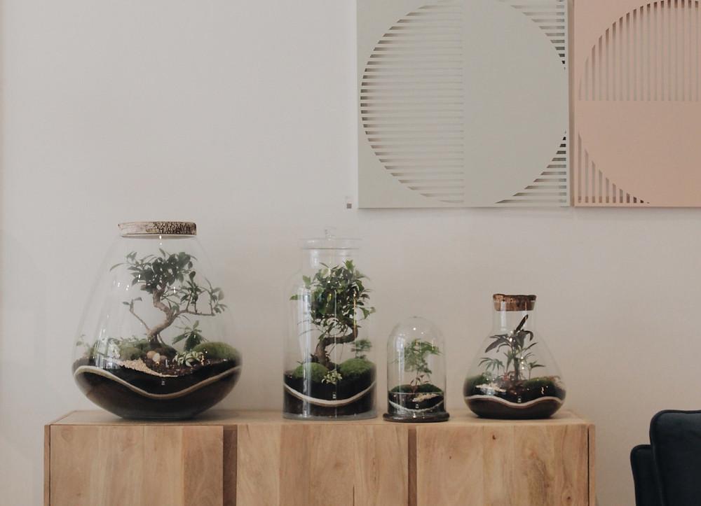 Points de ventes des terrariums Onno en Rhône Alpes : Lyon, Vienne, Annecy, Thonon les bains, Roanne, Grenoble