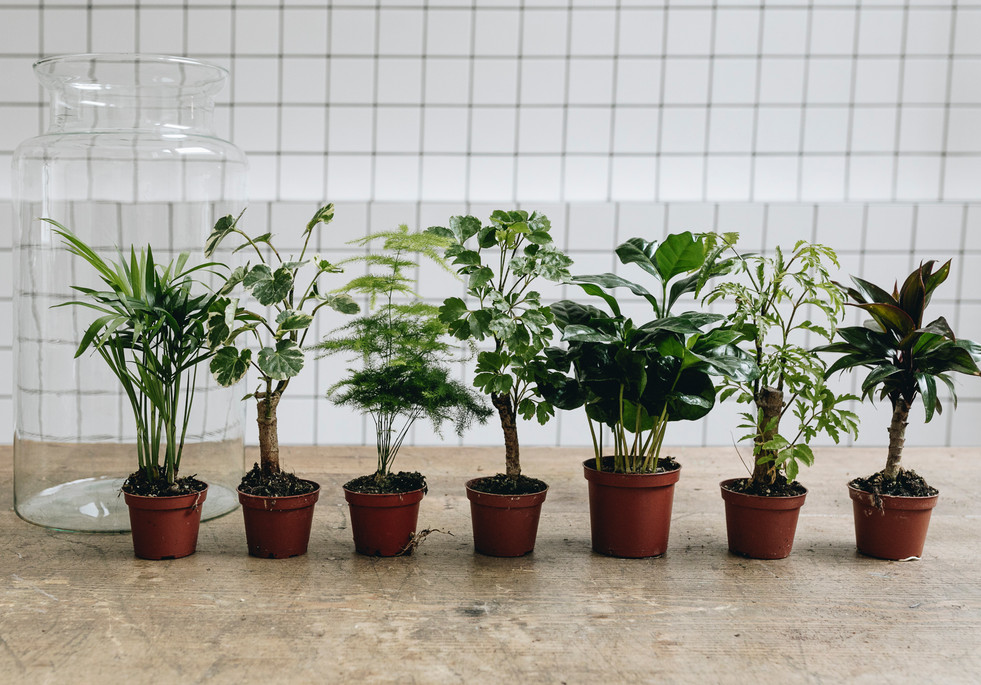 Plantes de terrariums pour un atelier DIY format XL à Lyon Rhône Alpes France chez Onno jardins intérieurs