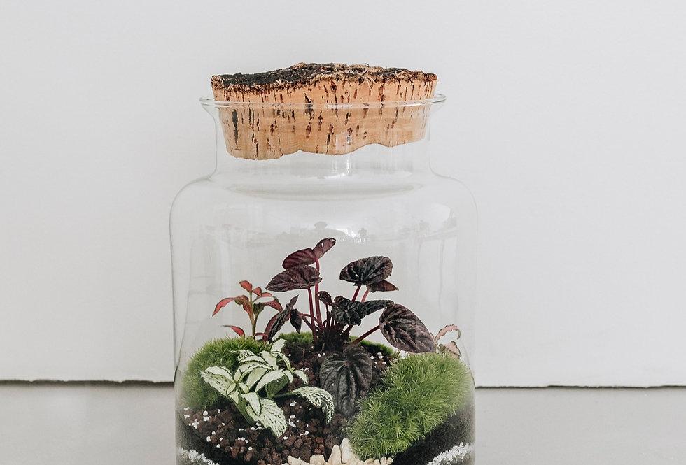 Terrarium Brasilia à Lyon, Rhône Alpes, France. Contenant en verre, bouchon en liège, peperomia et fittonia