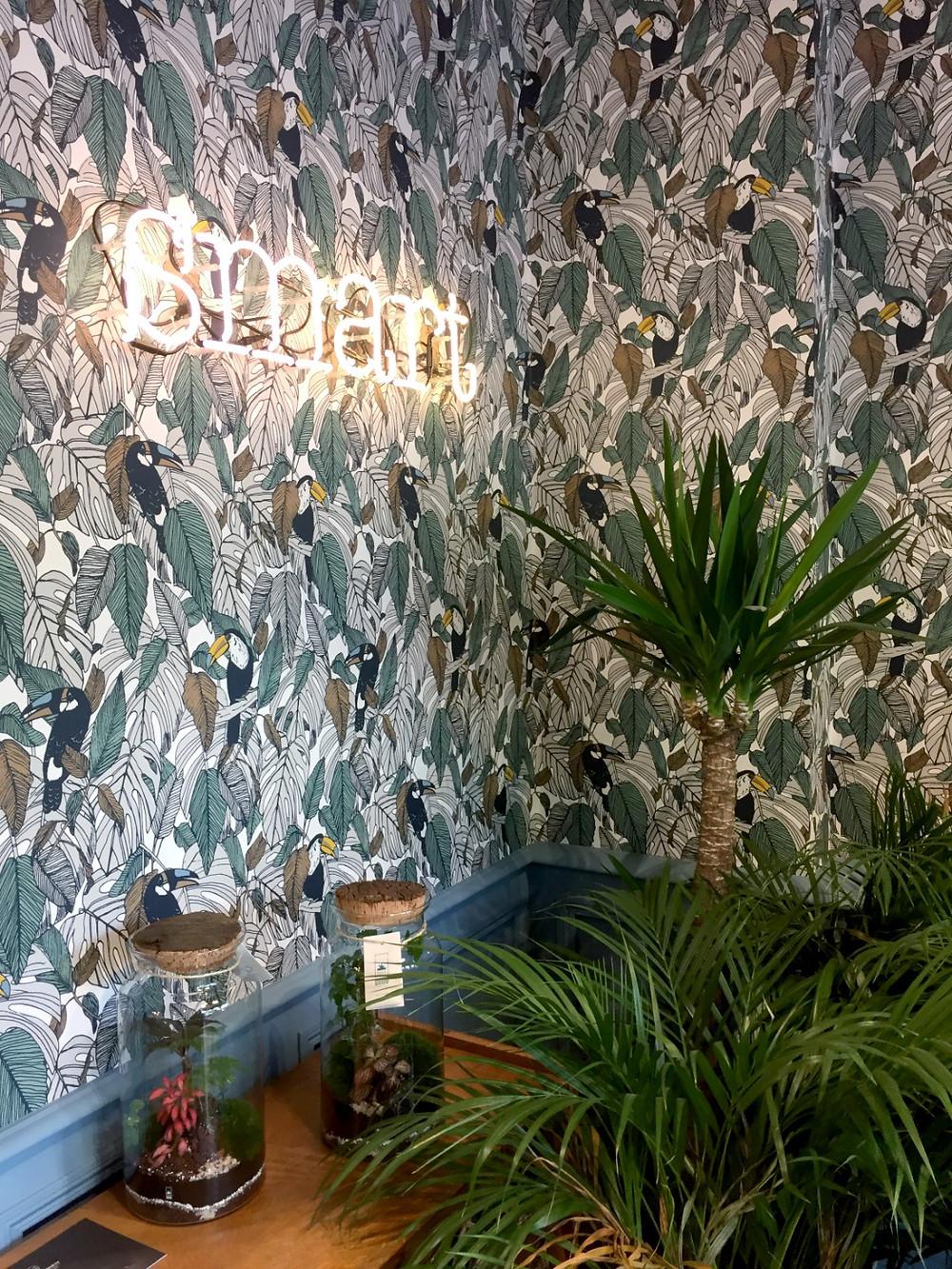 Boutique de décoration Smart avec terrariums Onno