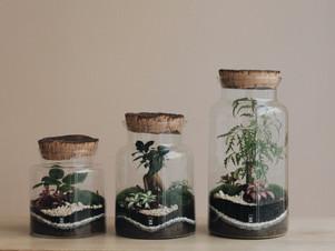 Retrouvez nos terrariums au VDCB (Lyon) et chez Mint Concept Store (Vienne)