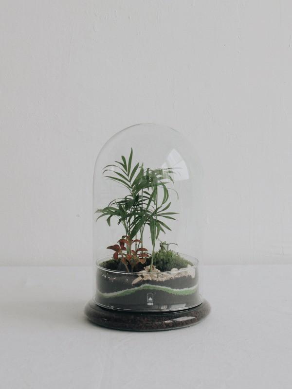 Terrarium Maya Onno en verre recyclé à Lyon France