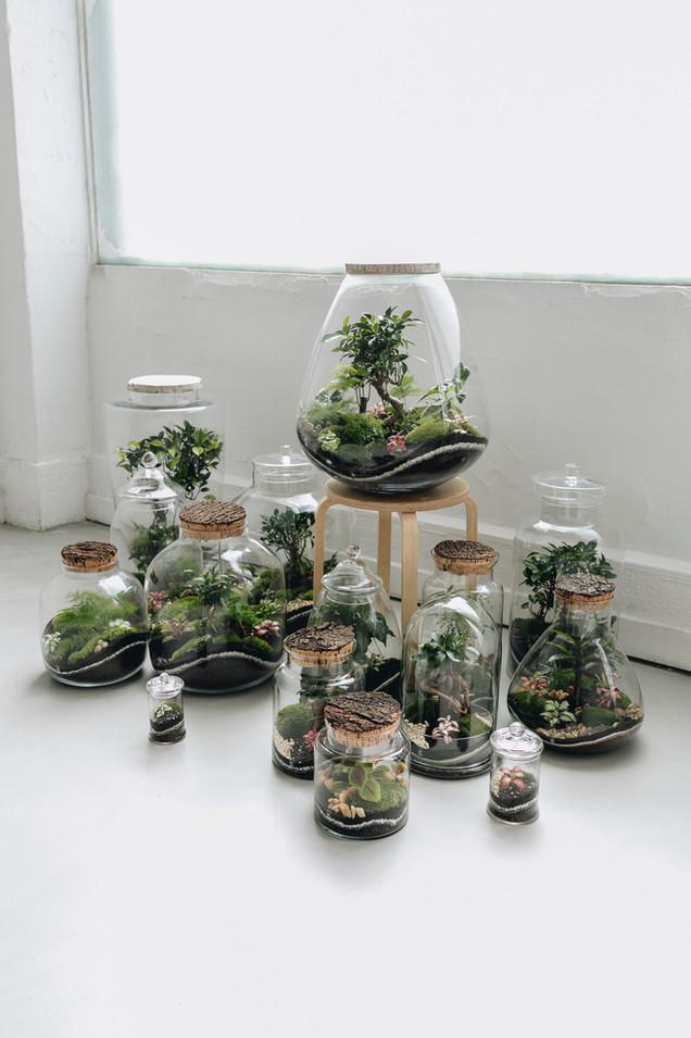 Présentation de la collection 2020 des terrarium Onno jardins intérieurs